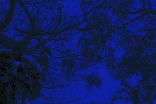 Texture foliage background