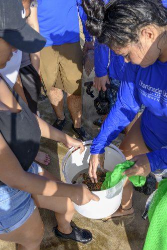 Environmental sciences students studying algae at Diamond Head beach