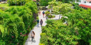beautiful walkway on Chaminade University campus