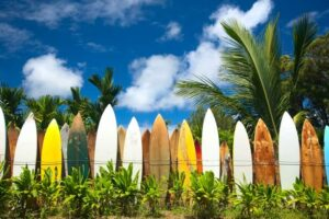 surf studies surfboard in a row